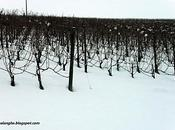 neve sulle langhe
