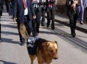 "Lentini (Sr): muore ""Gaetano cane umano"", sindaco dedica lettera d'addio"