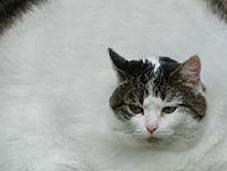 Obesita' gatto