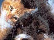 Cardiopatie cane gatto ,attenzione farmaci