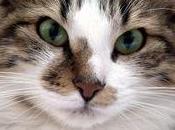 Come comunicare vostro gatto
