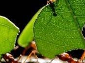 rimedi naturali contro formiche