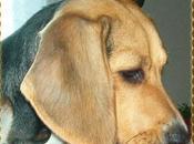 Oggi compleanno Brenda: cane sotto estorsione!