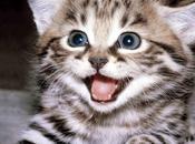 Vita Gatti...