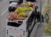 giardino sull'autobus