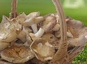 Salento leccese vedi spuntare come ...funghi