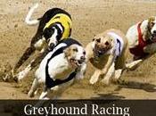 GREYHOUNDS corse Levrieri Betfair… Mercato sottovalutato…