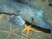 Biodiversita' marina: altro esempio guardare cio' oltre l'uomo