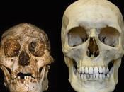 "Riaperto dibattito sull' Homo floresiensis: ""hobbit"" Sapiens?"