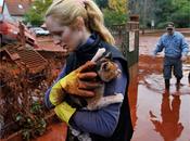 Ungheria: fango veleno anche animali
