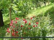 Rose maggio aforismi