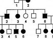 Alberi genealogici: esercizi soluzioni