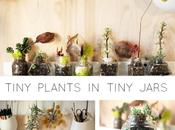 Plants glass jars