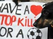 """""""Abbiate cuore. Basta uccidere cani pallone."""""""