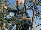 Porto Empedocle, grave Calogero Contino, l'uomo stato trafitto palo