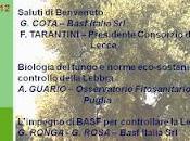 lebbra dell'olivo:lo stato dell'arte soluzioni possibili
