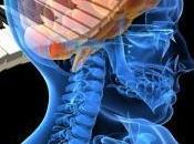 pianoforte nostro cervello: teoria cervello olonomico parte) Silvia Salese