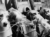 cani Beagle vengono fatti buchi nella gola attraverso quali sono forzati inalare fumo sigarette concentrato. Guardate anche scimmiette povere criste..