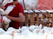 Mercati strada Ramadan: illegali pieno sole!