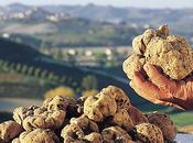 "Notte bianca Alba ""Welcome Truffle"""