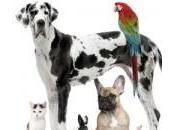 animali domestici sono salutari l'uomo