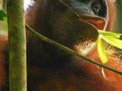 Dove viaggiare settembre: Borneo
