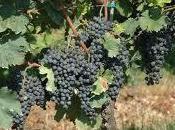 Amarone della Valpolicella: grande qualità l'annata 2012