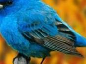 Twitter definisce massima utenza applicazioni terze parti, limita l'utilizzo nuove