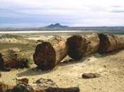 boschi pietrificati sorsero nella Patagonia Argentina milioni anni
