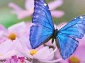 Fukushima, scoperta mutazione genetica nelle farfalle