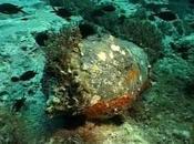 Isole Tremiti, isole bombe navi veleni