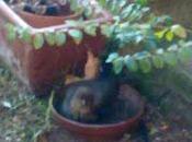 Piccoli amici giardino