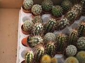 Progetto :centro tavola piccoli cactus