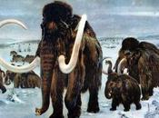 Scienziati russi giapponesi pronti realizzare clonazione Mammuth.