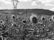 Flavio Cattaneo, Terna gotha mondiale della sostenibilità