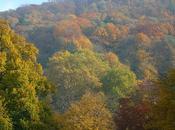 boschi della Germania