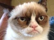 Tard, gatto sembra sempre incazzato...