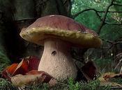 FUNGHI andare funghi...