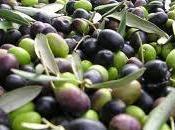 Sannicandro Bari, Sagra delle Olive, Special Guest Ivana Spagna