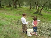 L'oliva muore, l'olio vive…