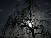 """""""Luna veloce"""" /Haiku celebri Spazio Nostalgia"""
