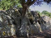 Oschiri Ozieri: altari sacri, chiese campestri grotte magiche
