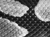 Texture Pelle Serpente Design