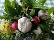 foto l'edera variegata, menta, rosmarino, salvia,l'alloro, asparagi, ravanelli, l'aglio rosa Banksia Lutea. vaso dell'orto