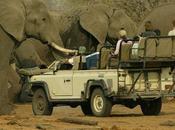 Botswana /Tutela della fauna stop alle licenze caccia