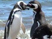 Love story pinguini: amore lungo anni