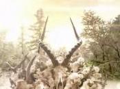 Soundgarden King Animal