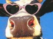 Bando gara vendita Vacca