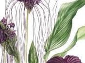 Botanical exotics