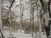 Nevicata kilo